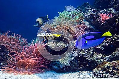 Underwater life, Fish, coral reef