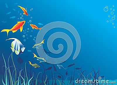 Underwater life. Fish, seaweed