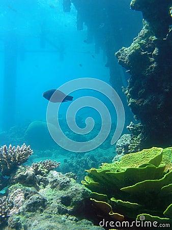 Free Underwater Mystery Stock Photo - 954440