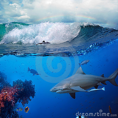 Underwater ocean story with surfer and shark