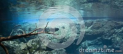 Underwater Panoramic - Cypress Springs