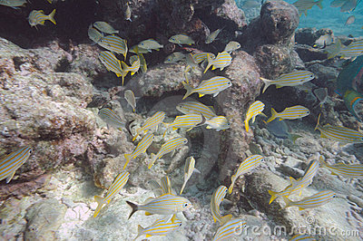 Underwater picture of tropical fish
