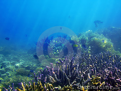 Underwater Reef Scene
