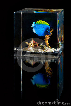 Underwater scene inside plastic cube