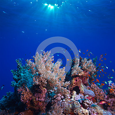 Free Underwater Scenery Beautiful Coral Reef Full Of Colorful Fish Royalty Free Stock Image - 28260136