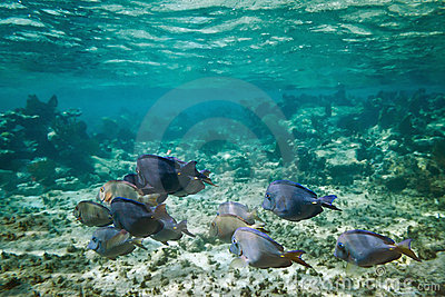 Underwater scenery of Caribbean Sea