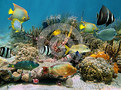 Underwater Scenery With Colorful Sea Life Stock Image ...