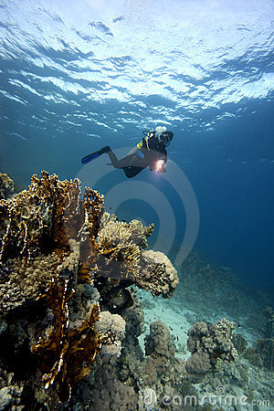Underwater : Scuba-Diver & coral reef