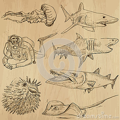Free Underwater, Sea Life (vector Set No.2) - Hand Drawn Stock Image - 41160151