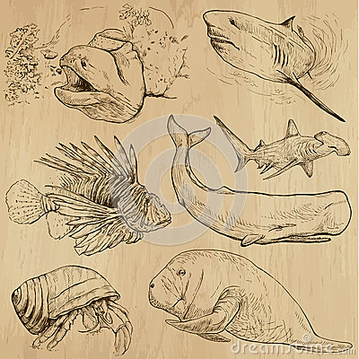 Free Underwater, Sea Life (vector Set No.4) - Hand Drawn Stock Photo - 41160160