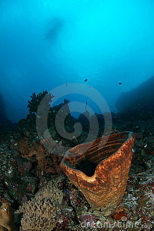 Underwater sea sponge view