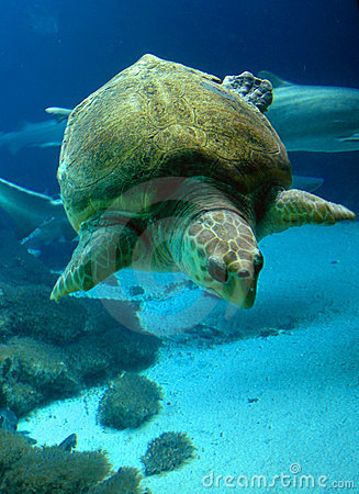 Free Underwater Sea Turtle Stock Image - 74761