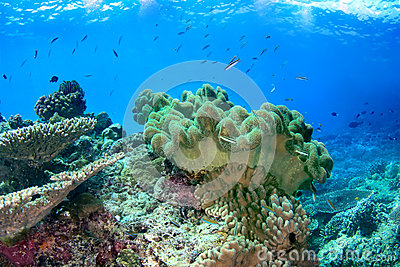 Underwater seascape with soft coral