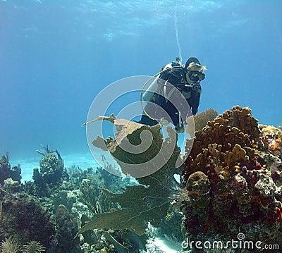 Underwater sightseer