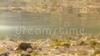 Underwater video of freshwater stream. This is an underwater video of a freshwater stream. The water is fairly clear. There is algae on some of the rocks. This stock footage