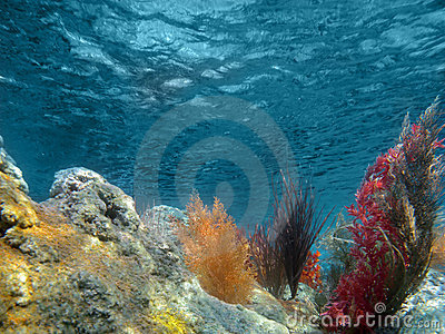 Underwater View of the Ocean With Plants and Coral