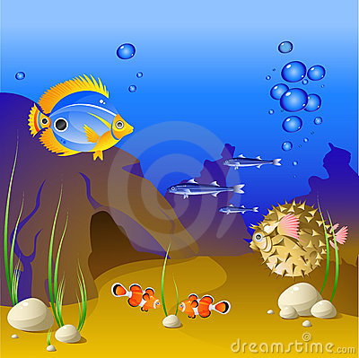 The underwater world of tropical fish.