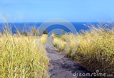 Undeveloped Hawaiian Land