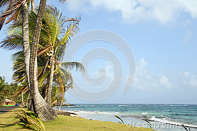 Undeveloped Sally Peach beach palm trees  Caribbean Sea with nat