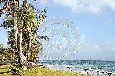 Undeveloped Sally Peach beach palm trees  Caribbean Sea with nat