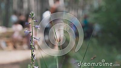 Une belle fleur semblable à une cloche dans la forêt, des gens en arrière-plan banque de vidéos