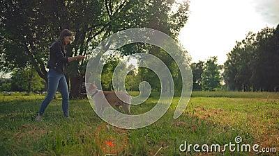Elle lance un appel à témoins pour retrouver son chien disparu il y a un an à km de chez elle