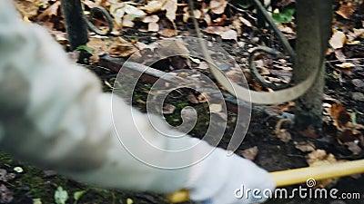 Une femme ramasse des feuilles du sol Feuilles automnales tombées banque de vidéos