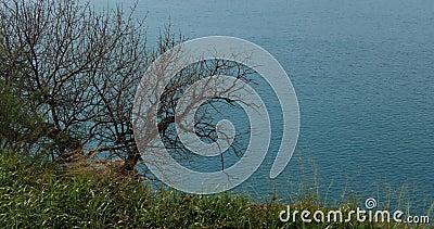 Une herbe verte et un arbre libre de feuilles graphiques sur un fond bleu de mer clips vidéos