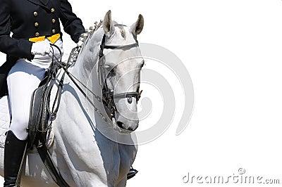 Une verticale de cheval gris de dressage a isolé