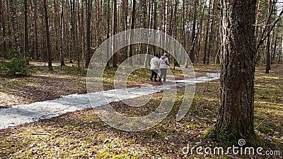 Unerkennbare ältere Menschen mit Wanderstöcken gehend auf Wanderung im Wald stock video