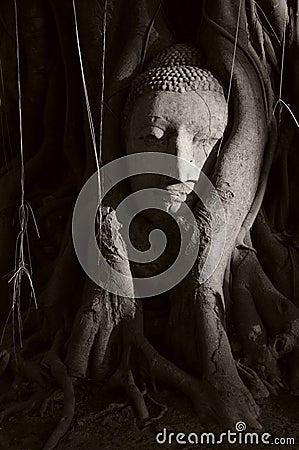 UNESCO Historic Buddha head of Ayutthaya, Thailand