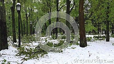 Unfall der starken Schneefälle und gefallene Bäume auf Stadtstraßen stock footage