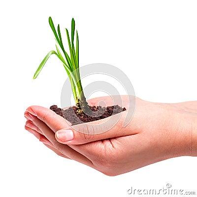 Ung växt i händer