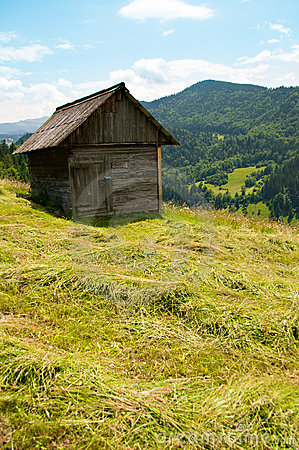 Ungathered hay