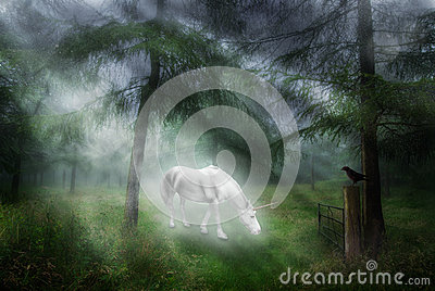 Unicorn In A Forest