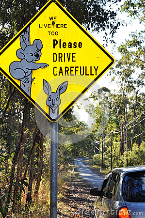 Unique Australian wildlife road sign of koala