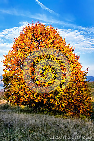 Unique autumn tree