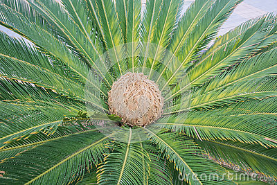 Unique plant