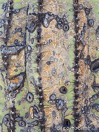 Free Unique Texture On An Old Saguaro Cactus Stock Photo - 72955390