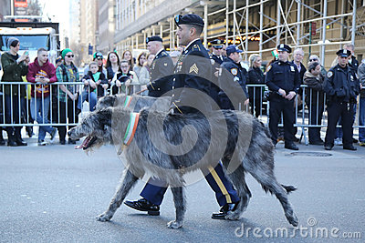 United States Army Ranger with Irish Wolfhound marching at the St. Patrick`s Day Parade in New York. Editorial Stock Image