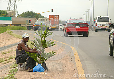 An unknown man sells live Christmas tree on the road. Editorial Stock Image
