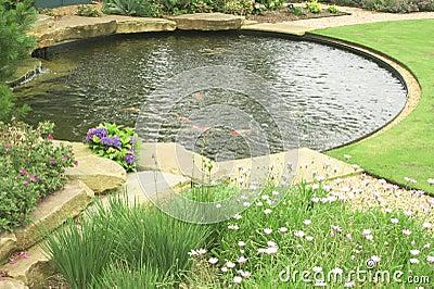 Uno stagno di pesci dell 39 oro nel giardino immagine stock for Pesci da stagno
