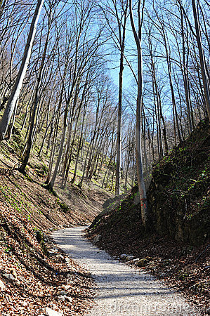 Unpaved road through the trees