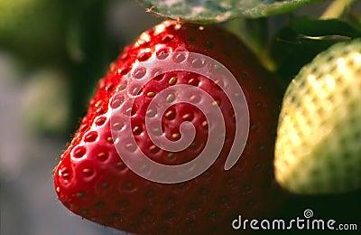 Unplucked Strawberry