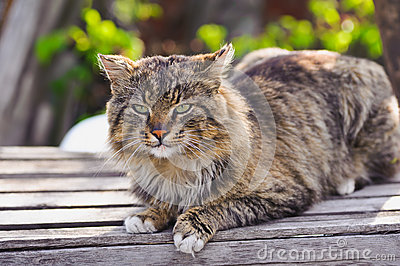 Unruffled cat sitting and stern looking.