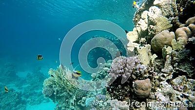 Unterwasserleben Schönes Korallenriff stock video footage