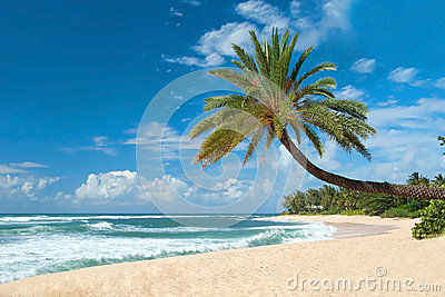 Untouched sandy beach with palms trees and azure ocean