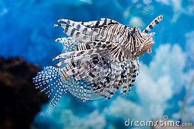 Unusual fish