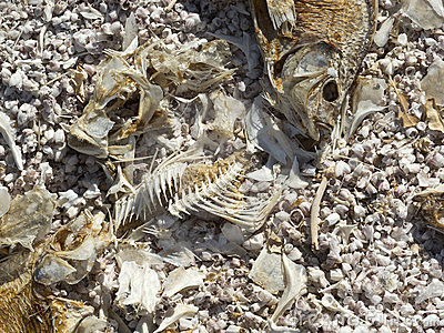 Unusual remains on the Salton Sea shoreline