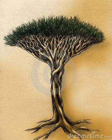 Unusual tree - pencil drawing